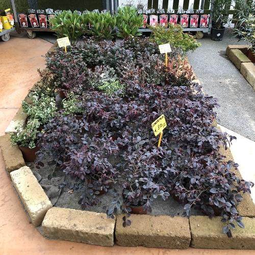 piante da esterno e aiuola agriverde pasiano pn