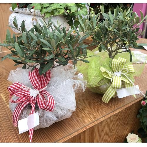 confezioni-olivi-mini