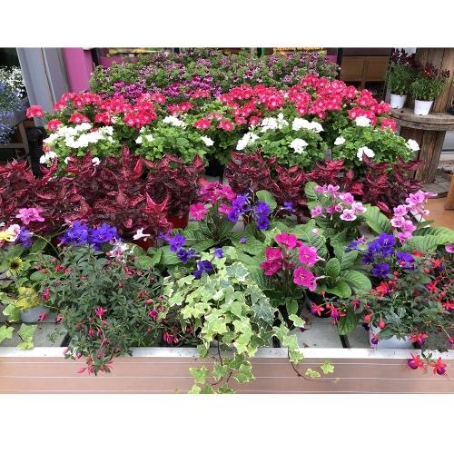 piante-esterno-estate-2
