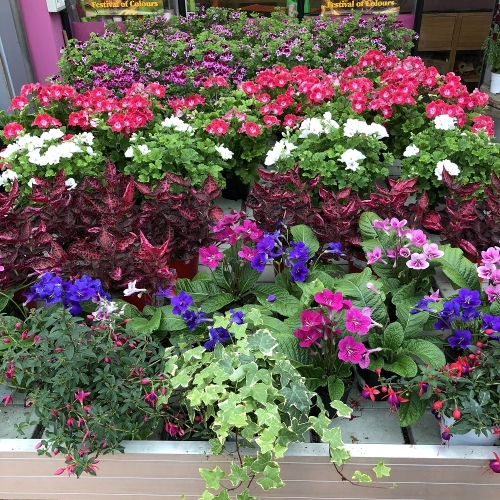 piante-esterno-estate