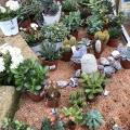 succulente-2